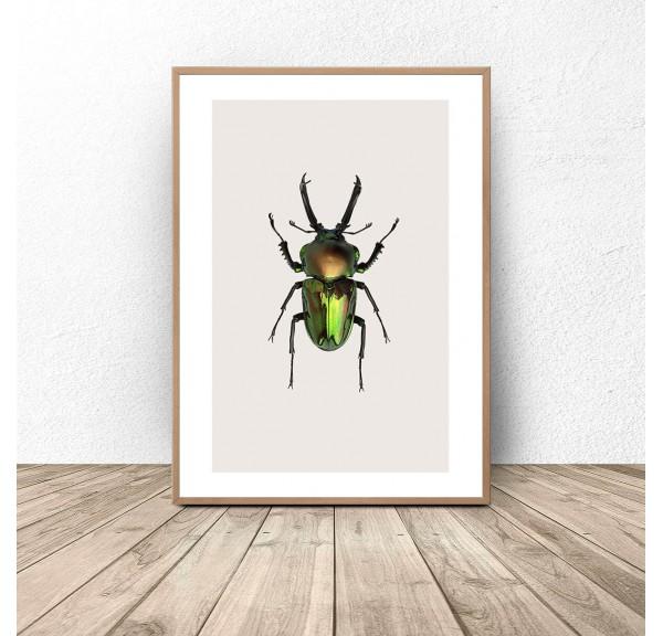 Plakat na ścianę z zielonym żukiem