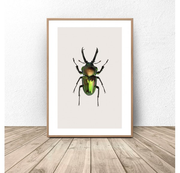 Poster for the wall with a green beetle