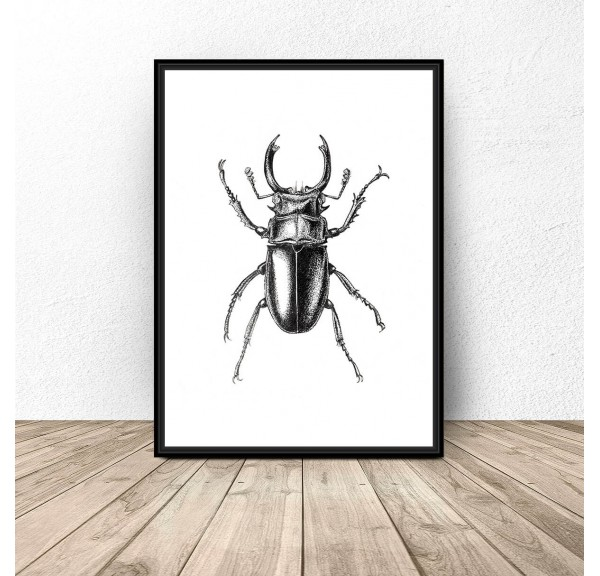 Poster for the wall Sketch of a beetle