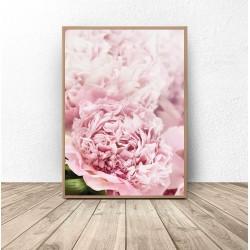 """Plakat botaniczny """"Różowe..."""