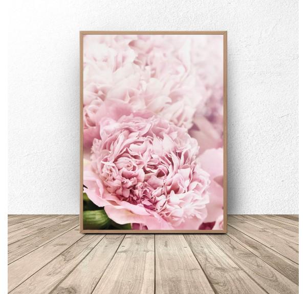 Botanical poster Pink peonies