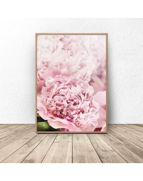 """Plakat botaniczny """"Różowe peonie"""""""