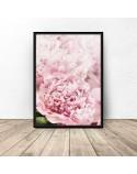 Botanical poster Pink peonies 2