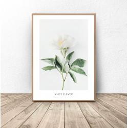 """Plakat botaniczny """"Biały..."""