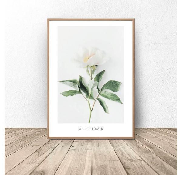 Plakat botaniczny Biały kwiat