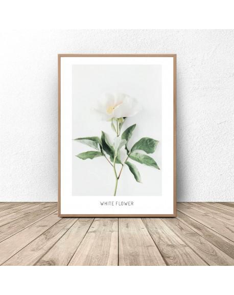 """Plakat botaniczny """"Biały kwiat"""""""