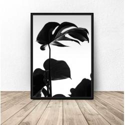 "Plakat botaniczny ""Czarna monstera"""