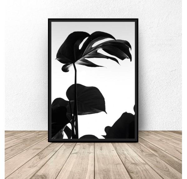 Plakat botaniczny Czarna monstera