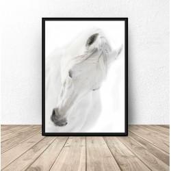 """Plakat z białym koniem """"White horse"""""""