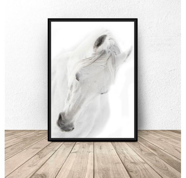 Plakat z białym koniem White horse