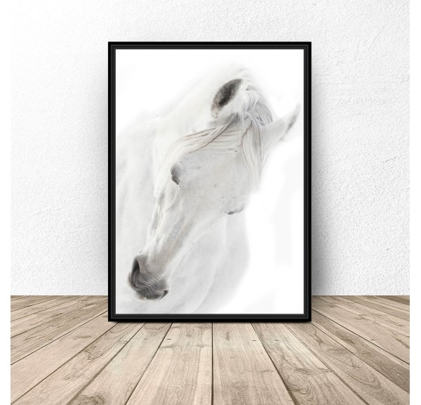 Poster with white horse White horse