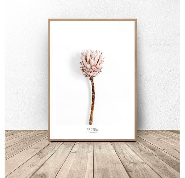 Plakat z kwiatem Protea