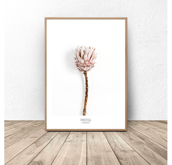 Poster with flower Protea