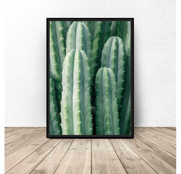 Plakat botaniczny Zielony kaktus
