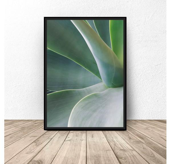 Botanical poster Agave