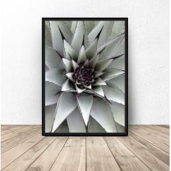 """Plakat botaniczny """"Kłujący kaktus"""""""