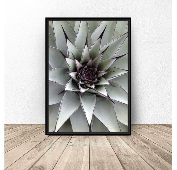Botanical poster Stinging cactus