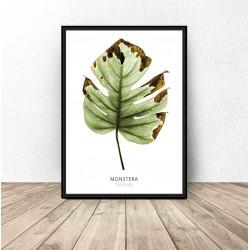 """Plakat botaniczny """"Monstera"""""""