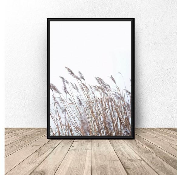 Decorative poster Tall grass