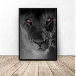 """Plakat na ścianę """"Oczy lwa"""""""