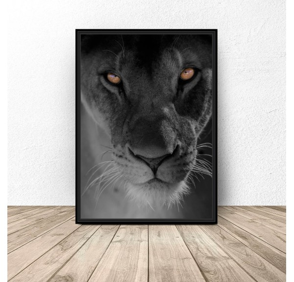 Plakat na ścianę Oczy lwa