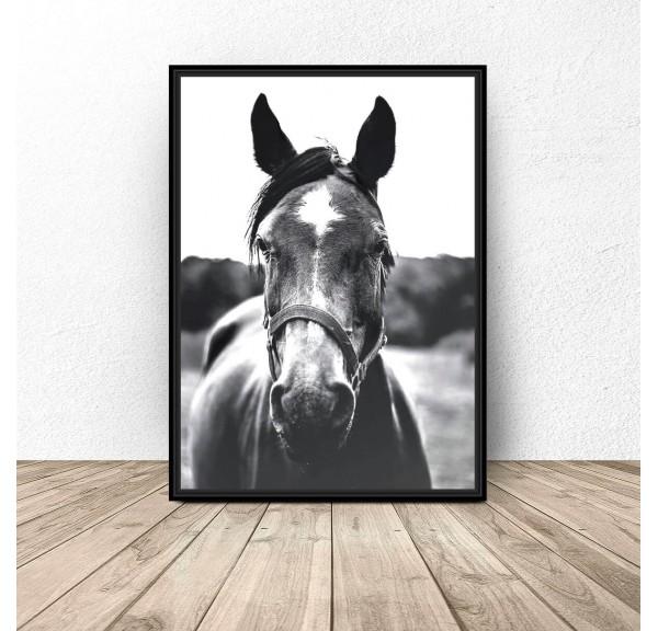 Czarno-biały plakat na ścianę Koń