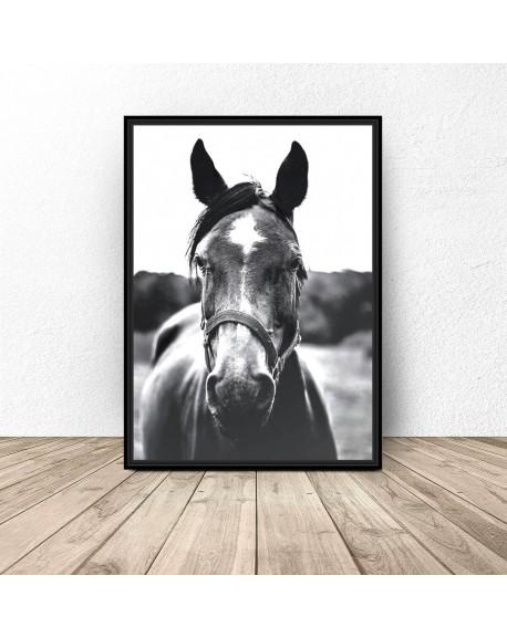 """Czarno-biały plakat na ścianę """"Koń"""""""