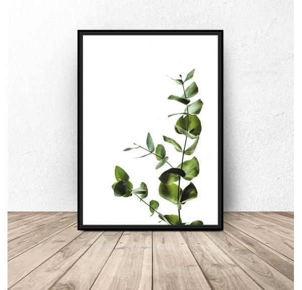 Plakat na ścianę Gałązka eukaliptusa