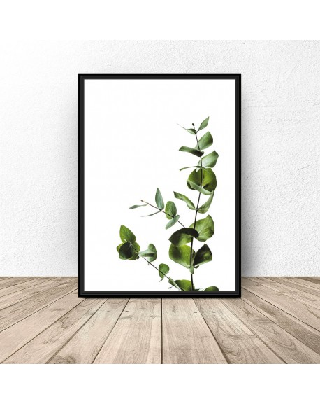 """Plakat na ścianę """"Gałązka eukaliptusa"""""""