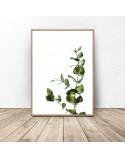 Plakat na ścianę Gałązka eukaliptusa 2