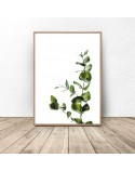 Poster for the wall Eucalyptus Twig 2