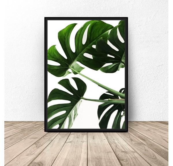 Botanical poster Lush monstera