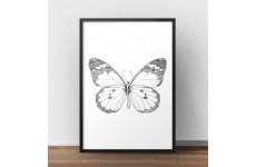 Plakat z grafiką motyla oprawiony w czarną ramę