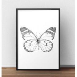 """Plakat z motylem """"Motyl - szkic"""""""