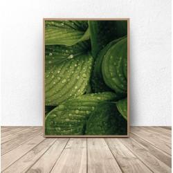 """Plakat botaniczny """"Mokre liście"""""""