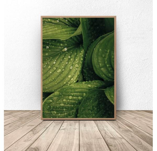 Plakat botaniczny Mokre liście