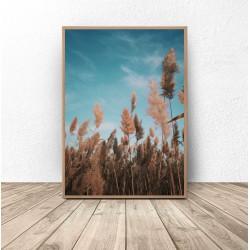 """Plakat fotograficzny """"Trawa pod niebiem"""""""