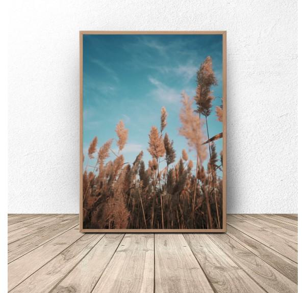 Plakat fotograficzny Trawa pod niebiem