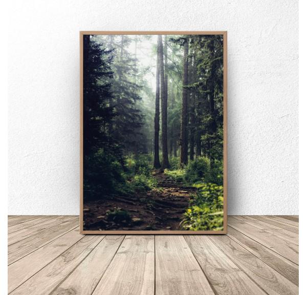 Plakat Zielony las w słońcu