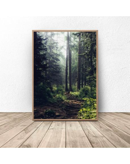 """Plakat """"Zielony las w słońcu"""""""