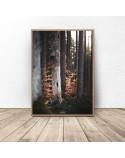 Plakat na ścianę Drzewa w lesie