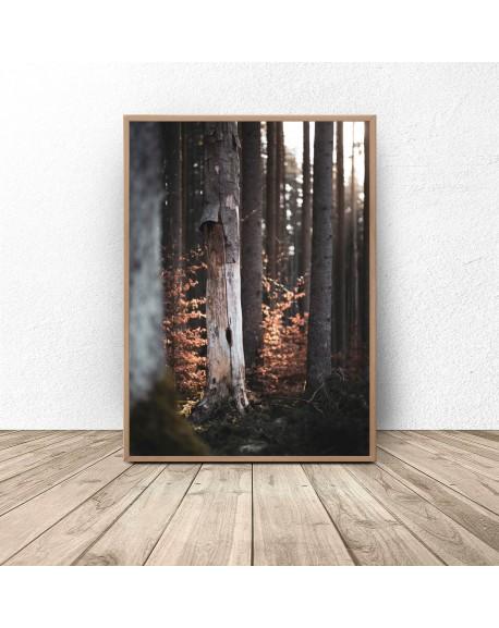 """Plakat na ścianę """"Drzewa w lesie"""""""