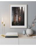 Plakat na ścianę Drzewa w lesie 2
