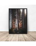 Plakat na ścianę Drzewa w lesie 3
