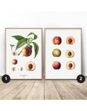 Zestaw dwóch plakatów do kuchni Brzoskwinie
