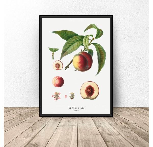 Plakat do kuchni i jadalni Brzoskwinia