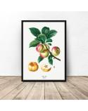 Plakat do kuchni i jadalni Jabłka