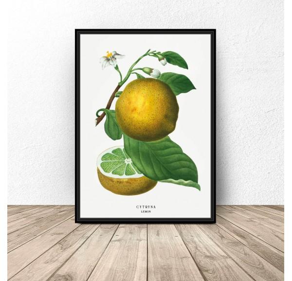 Plakat do kuchni i jadalni Cytryna