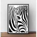 Plakat z zebrą Oko zebry