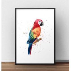 Plakat z kolorową papugą Ara
